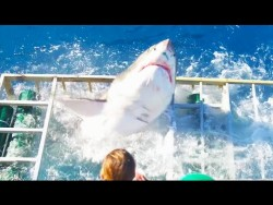 Great White Shark Cage Breach Accident – YouTube