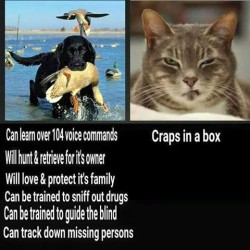 #dogsvscats