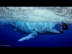 UNSEEN: Whale breach nearly misses swimmer – YouTube