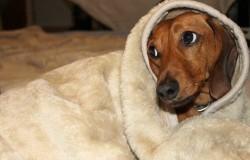 Anal gland problems in dogs | Animal Wellness Magazine