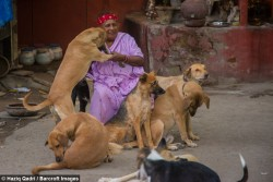 This 65 year old 'Dog Lady of New Delhi' spends her days feeding and nursing more t ...