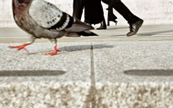 Wear Good Shoes: Inspiring Advice from Magnum Photographers – Free guide from Magnum Photo ...
