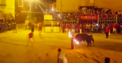Graphic Video Shows Bull Killing Itself After Horns Are Set Alight At Spanish Festival | HuffPost