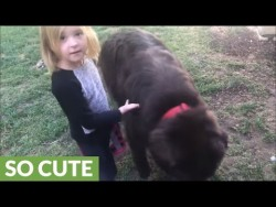 Little girl defends her dog after mom's accusations – YouTube