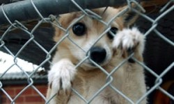 Peta says sorry for taking girl's pet chihuahua and putting it down | US news | The Guardian