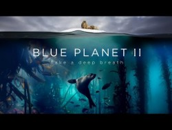 Blue Planet II : The Prequel – YouTube