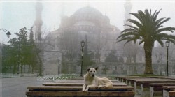 First loved and then massacred during the days of the Ottoman Empire, stray dogs in modern Turke ...
