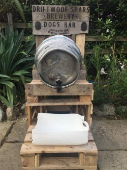 This St Agnes pub has just opened a new bar – especially for dogs – Cornwall Live