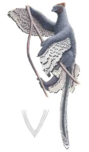 Feathered dinosaurs were even fluffier than we thought | Geology Page