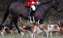 Police investigate claims of fox being killed during Boxing Day hunt | UK news | The Guardian