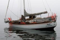 Sailing sea lions