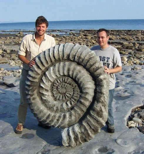 The size that ammonites could assume 400 million years ago