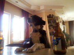 2 Beers please barkeep