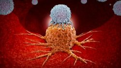 Breakthrough study stops cancer hijacking immune cells