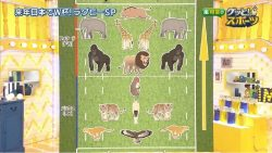 How China explains the rugby positions