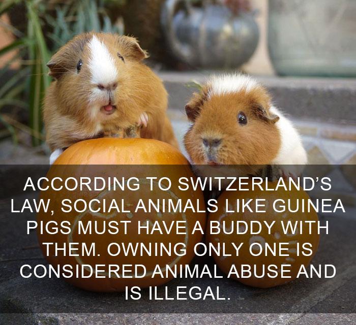 Good for Switzerland