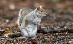 Squirrels listen to birds' chitchat to gauge if trouble's afoot – study