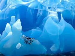 It takes thousands of years of compression to form these blue Icebergs