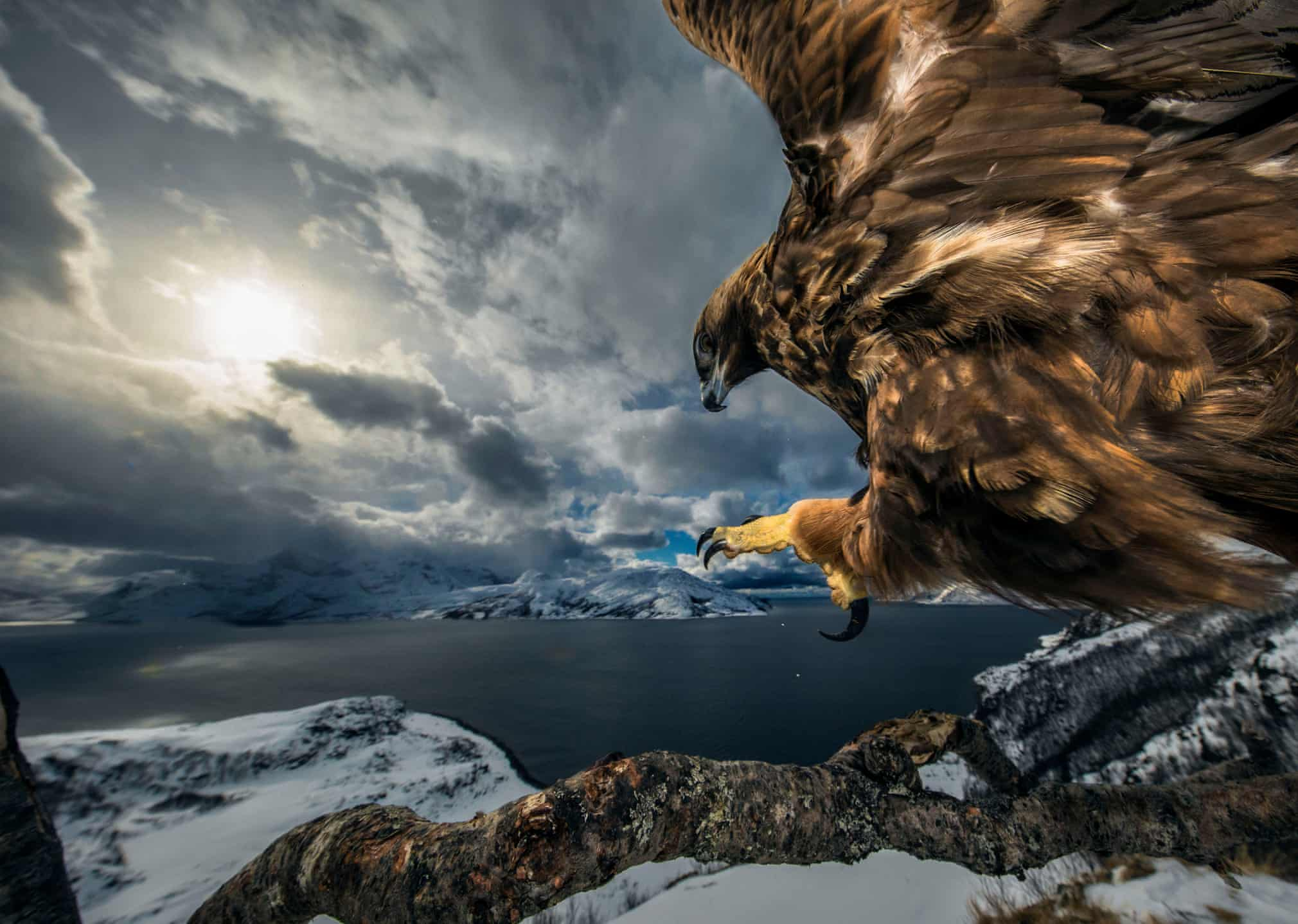 Wildlife photographer of the year 2019 winners