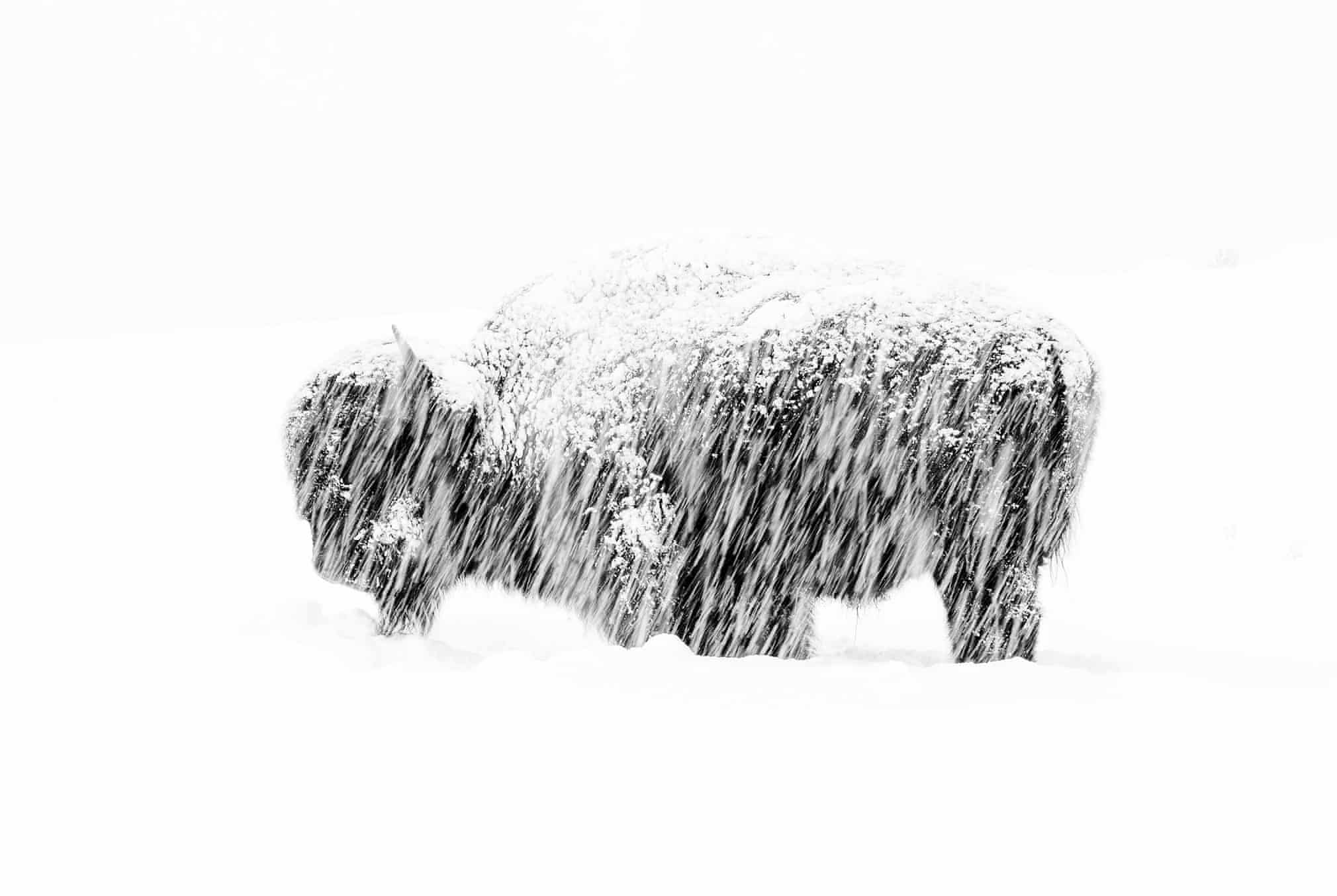 Wildlife photographer of the year 2019 winners