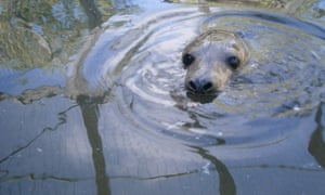 The RSPCA rescues one seal – and condones the killing of many others
