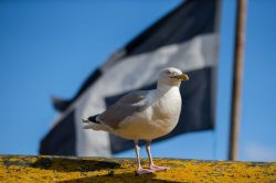 45 Cornish phrases that will confuse anyone outside Cornwall