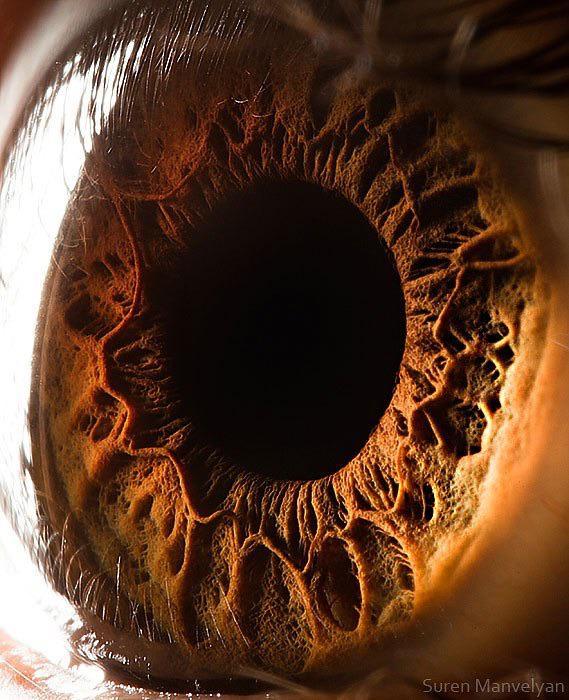 Close up of a human eye