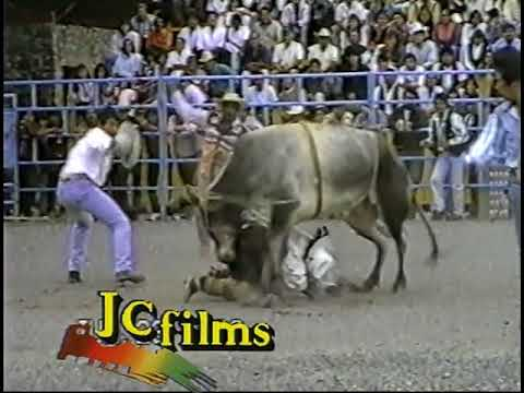 The bull wins compilation, AKA morons lose big time