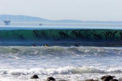 Seaweed or………  Kraken!