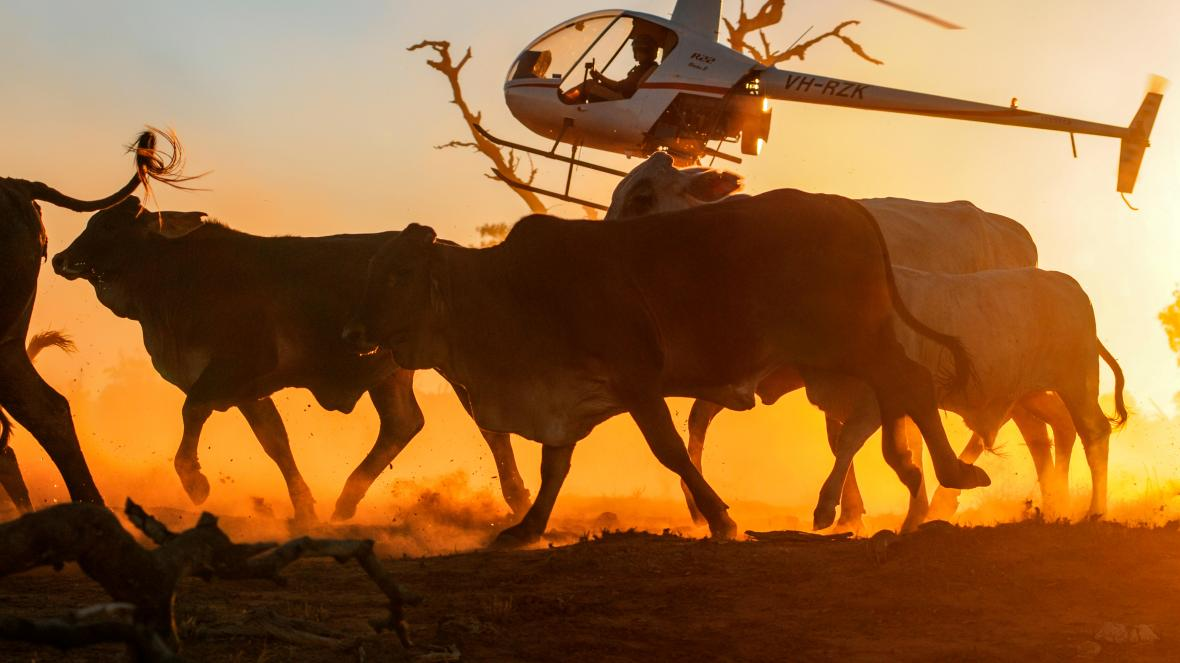 Australia to fight UK beef hormone ban in post-Brexit trade talks