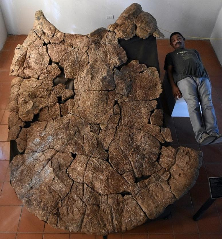 Fossils found of car-sized turtles that once roamed South America