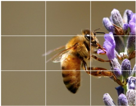 The Rule of Thirds is perhaps the most well-known 'rule' of photographic composition.