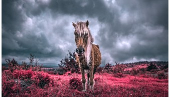 LOVE PHOTOGRAPHY? Digital Photography School has what you need to take your photography to the n ...