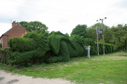 Topiary Dragon cut into hedge