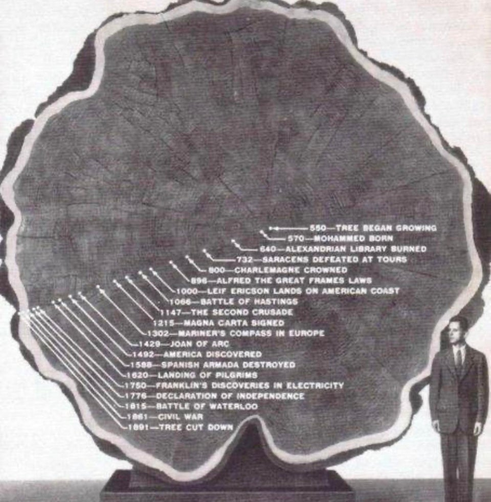 Timeline of a tree