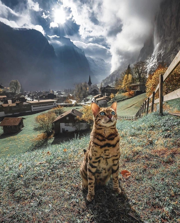 Happy Swiss cat