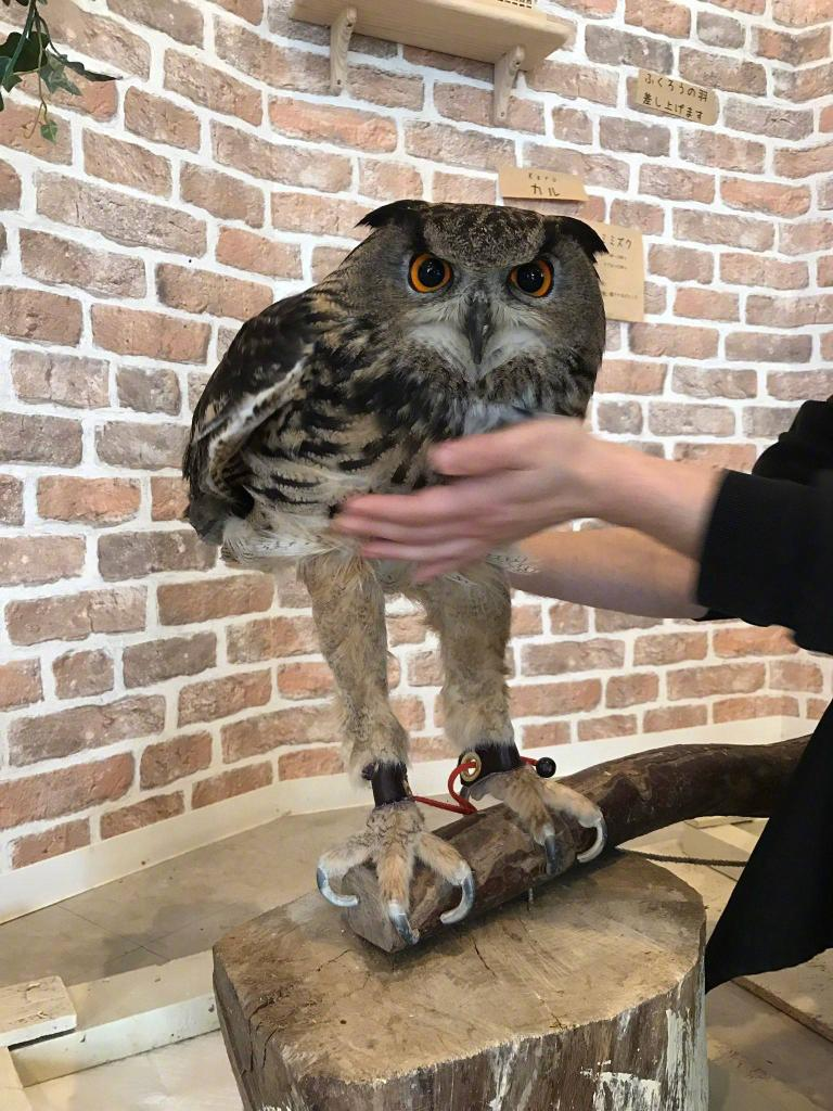 Owls have long legs… they're just hidden.