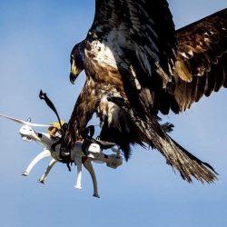 Nature vs. Technology