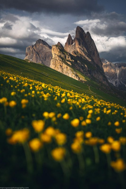 A carpet of flowers in the beautiful Dolomites