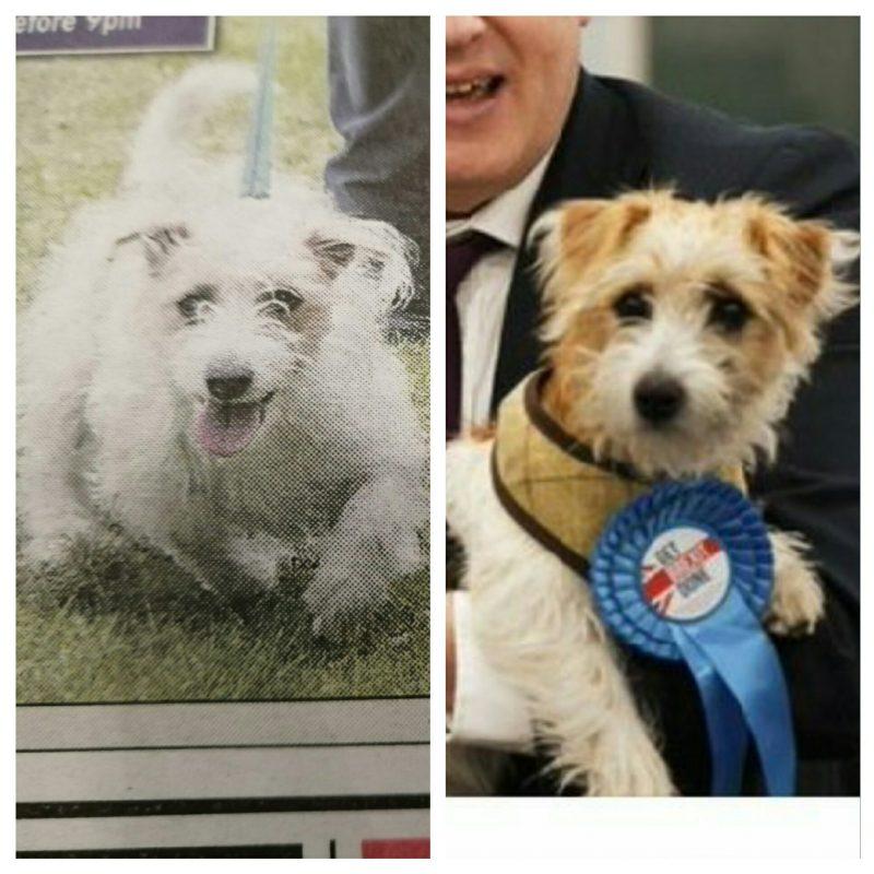 same dog?