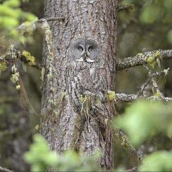 A tree with eyes