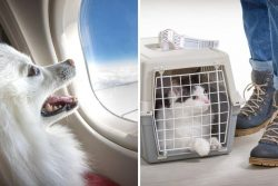 New pet travel rules for 2021 – you need to take action now if planning a holiday –  ...