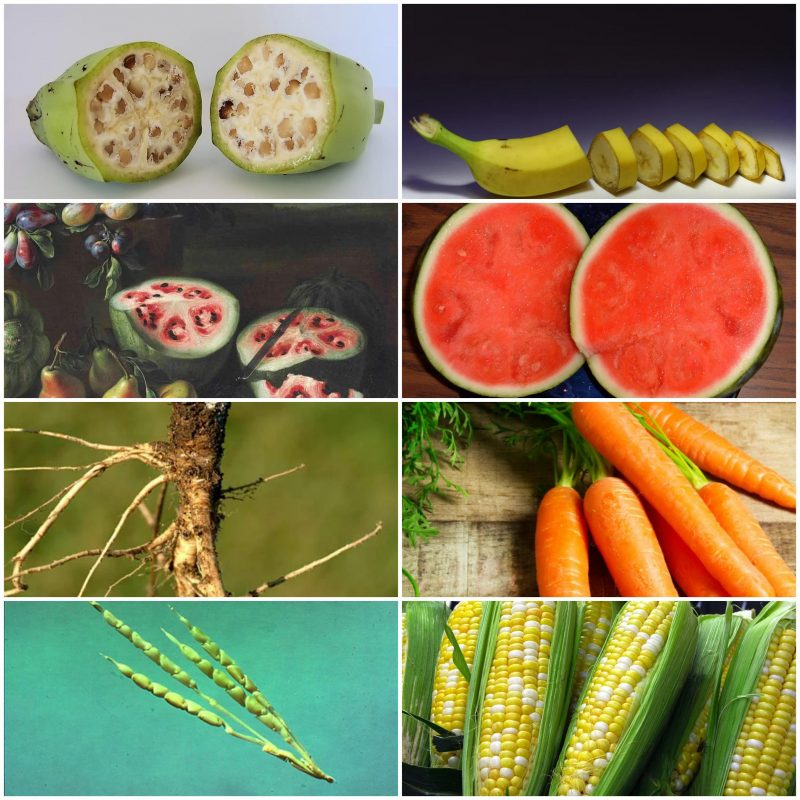 This is how selective breeding has modified different foods over thousands of years