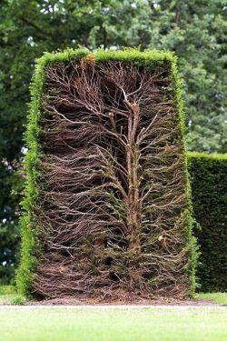 A hedge cut in half
