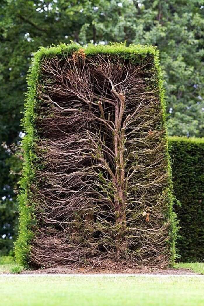 A hedge cut in half