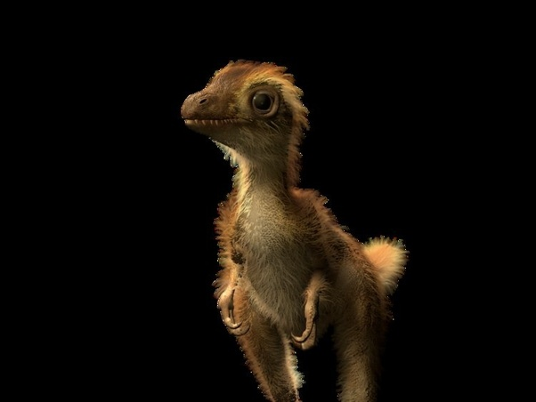 What a baby T. rex might have looked like.