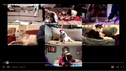 Therapy dogs go virtual at California hospital during pandemic