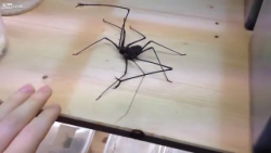 Spiders with fucking HANDS! Thanks 2020