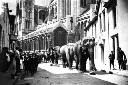 Elephants parade past Truro Cathedral more than 100 years ago