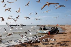 Revealed: the millionaires hoarding UK fishing rights – Unearthed